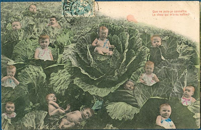 Multiple Babies In Cabbage Patch, Giant Cabbages 1904